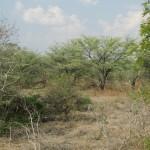 Namibia Bogenjagdgelände