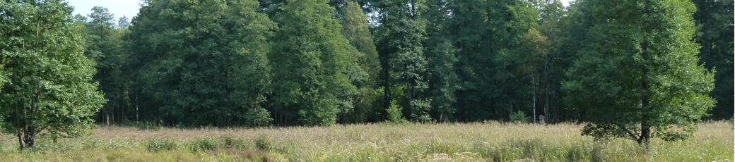 Bogenjagd ! Bogenfachgeschäft Hildesheim, Bogenhändler Hildesheim, Bogensportgeschäft Hildesheim, Trationelles Bogengeschäft Hildesheim - Bogenfachgeschäft in der Region Hannover, Bogenhändler in der Region Hannover, Bogensportgeschäft in der Region Hannover Trationelles Bogengeschäft in der Region Hannover- Bogensport Hannover, Bogensport Braunschweig, Bogensport Hildeshei , Bogenschießen Hannover, Bogenschießen Braunschweig, Bogenschießen Hildesheim.- Bogenevents, Bogenkurse, Bogensemnare in Hildesheim, Bogenevents, Bogenkurse , Bogenseminare in Hannover, Bogenevents, Bogenkurse, Bogenseminare in Braunschweig weiter in der Region Hannover und Überregional Deutschland weit...