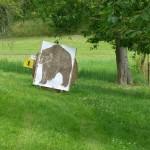 Feldbogenkurs und 3D - Bogenseminar Hornburg Tierbildauflagen! Tierbildauflagen, 3D-Ziele, WA-Scheibenauflagen, Zielscheiben und Scheibennägel ... - Bogensport Hornburg, Bogenschießen Hornburg -